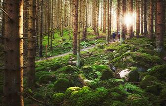 サステナビリティの原点-自然との密接な関係